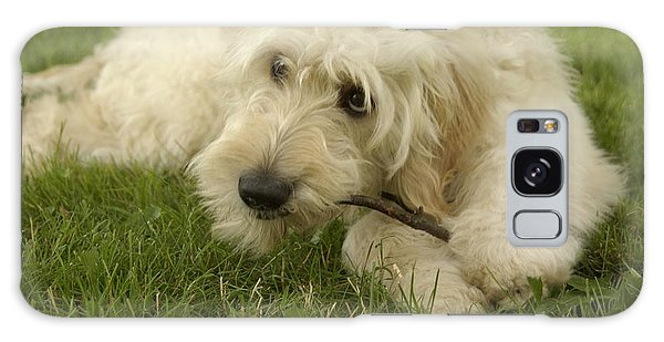 Goldendoodle Pup With Stick Galaxy Case