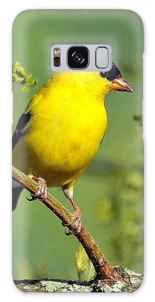 Goldfinch 328 Galaxy Case
