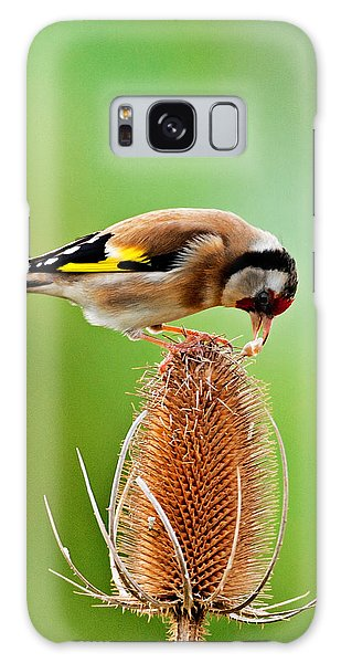 Goldfinch Feeding On Teasel Comb. Galaxy Case