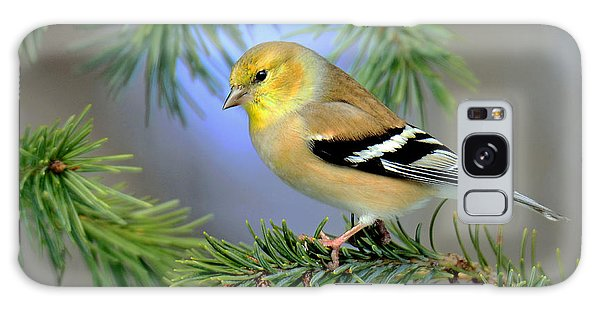 Goldfinch In A Fir Tree Galaxy Case by Rodney Campbell