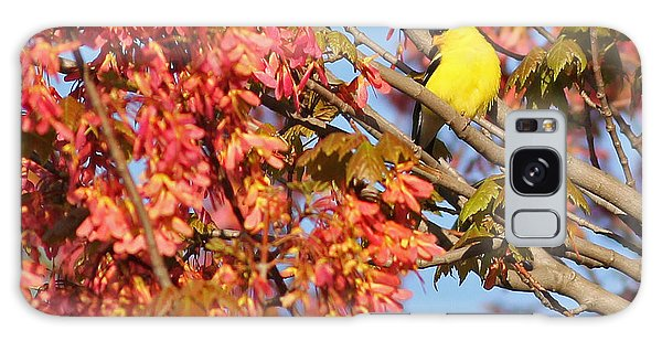 Goldfinch In Spring Maple Tree Galaxy Case