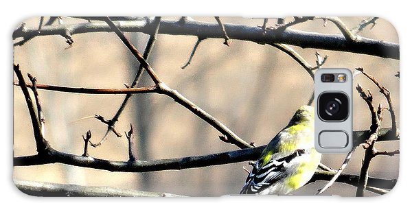 Goldfinch On Budding Branch Galaxy Case