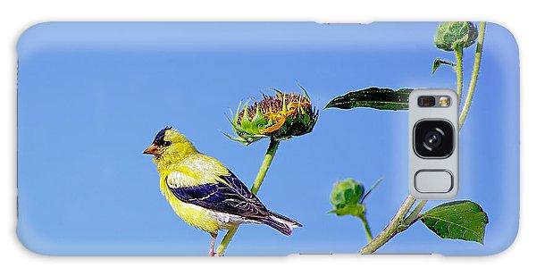 Goldfinch On Stem Galaxy Case