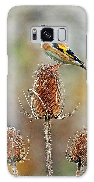 Goldfinch On Teasel Head. Galaxy Case