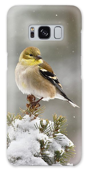 Goldfinch In The Snow Galaxy Case
