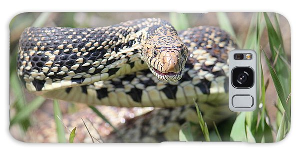 Gopher Snake Mimic Galaxy Case