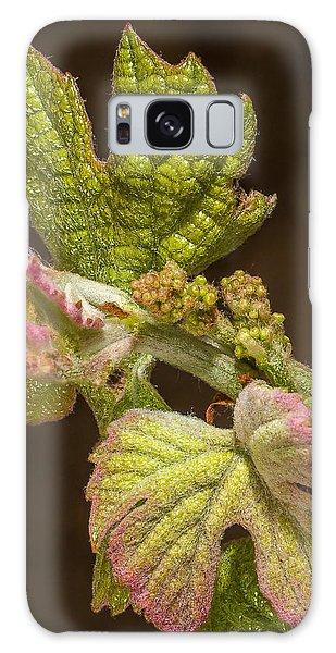 Grape Bud Break Galaxy Case by Len Romanick