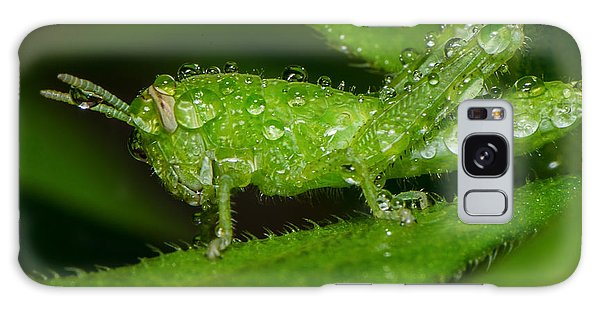 Grass Hopper In The Rain Galaxy Case
