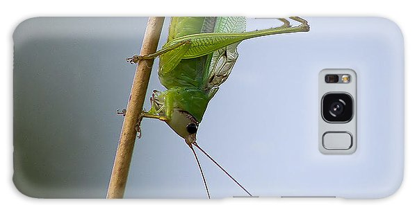 Grasshopper Galaxy Case by Anne Rodkin
