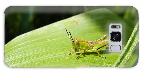 Grasshopper On Corn Leaf   Galaxy Case