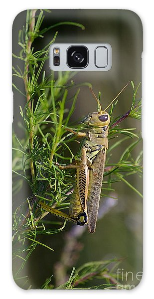 Grasshopper Galaxy Case by Tannis  Baldwin