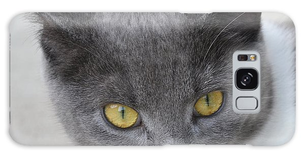 Gray Cat - Listening Galaxy Case by Tine Nordbred