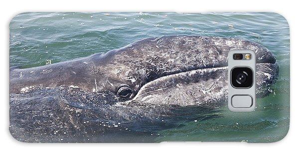 Gray / Grey Whale Eschrichtius Robustus Galaxy Case
