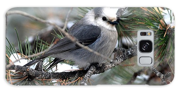 Gray Jay On A Snowy Pine Galaxy Case