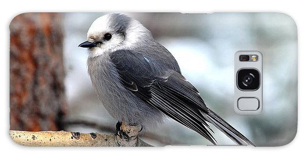 Gray Jay On Aspen Galaxy Case