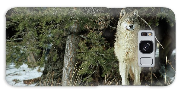 Cold Day Galaxy Case - Gray Wolf (canis Lupis by Richard and Susan Day