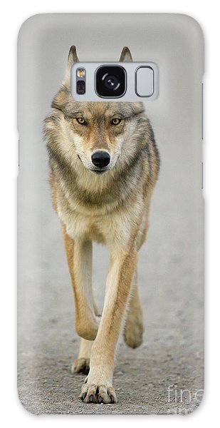 Gray Wolf Denali National Park Alaska Galaxy Case