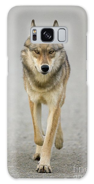 Gray Wolf Denali National Park Alaska Galaxy Case