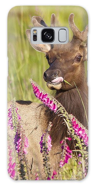 Grazing At Dusk - Cropped Galaxy Case by Todd Kreuter
