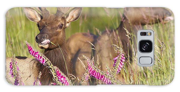 Grazing At Dusk Galaxy Case by Todd Kreuter