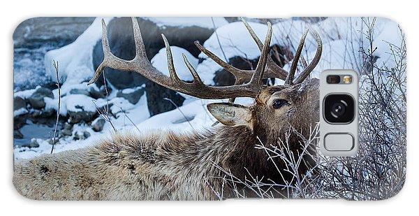 Grazing Elk Galaxy Case