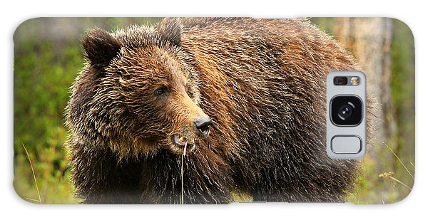 Grizzly Bears Galaxy Case - Grazing Grizzly by Stephen Stookey