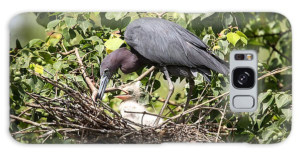 Great Blue Heron Chicks In Nest Galaxy Case
