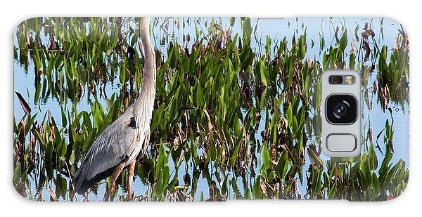 Great Blue Heron In Pickerelweed Galaxy Case by Karen Stephenson