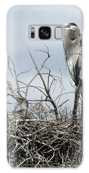 Great Blue Heron Nest With New Chicks Galaxy Case