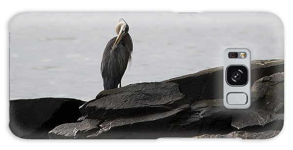 Great Blue Heron Preening Galaxy Case by Rebecca Sherman