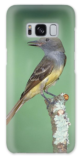 Great Crested Flycatcher Myiarchus Galaxy S8 Case