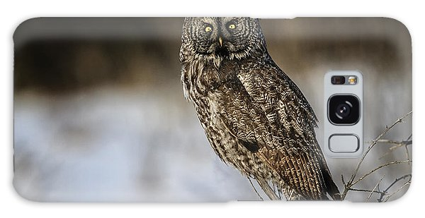 Great Gray Owl 2 Galaxy Case by Gary Hall