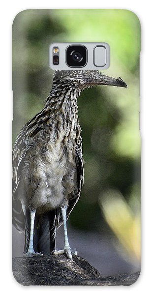 Greater Roadrunner  Galaxy Case