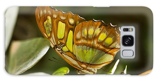 Green And Brown Tropical Butterfly Galaxy Case
