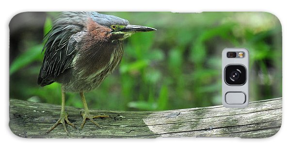 Green Backed Heron At The Swamp Galaxy Case by Rebecca Sherman