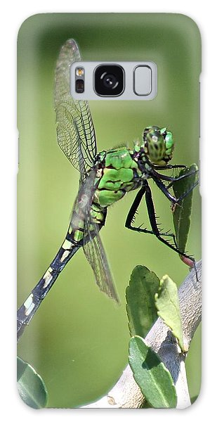 Green Dragonfly Eastern Ponhawk Galaxy Case