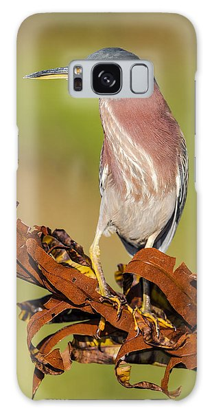 Green Heron Galaxy Case by Andres Leon