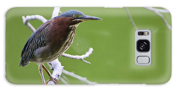 Green Heron Galaxy Case by Larry Bohlin