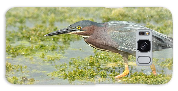 Green Heron On The Hunt Galaxy Case