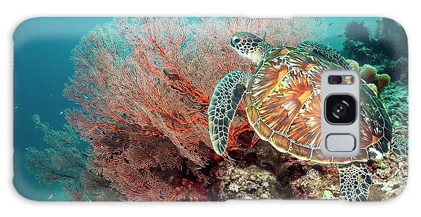 Green Sea Turtle And Gorgonian Galaxy Case