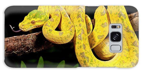 Green Tree Python, Morelia Galaxy S8 Case
