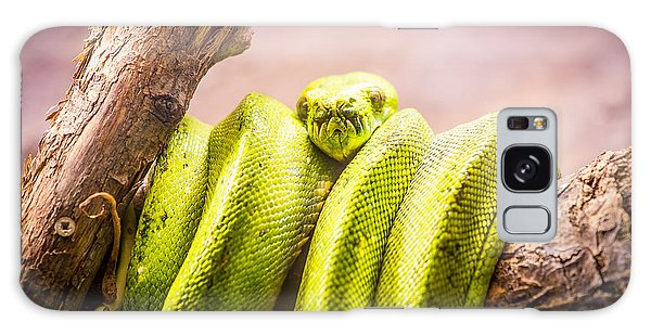 Green Tree Python Galaxy Case by Pati Photography