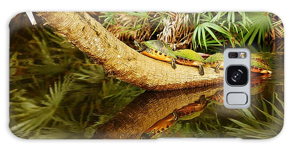 Boynton Galaxy Case - Green Turtles Chelonia Mydas On A Tree by Panoramic Images