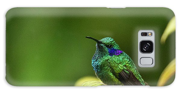 Green Violetear Hummingbird Galaxy Case