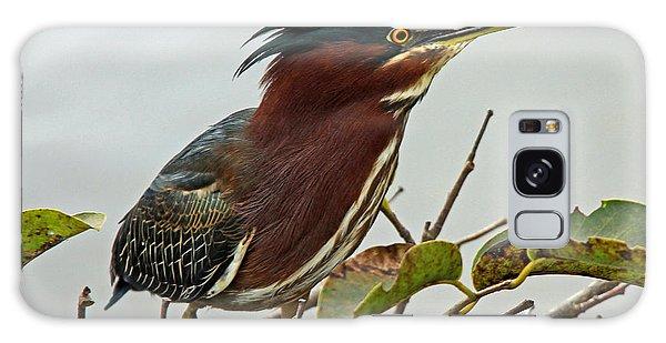 Audubon's Green Heron Galaxy Case