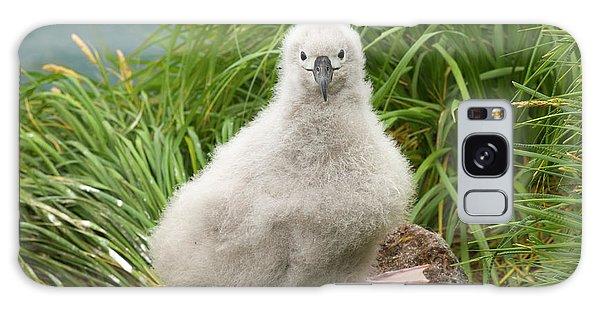 Grey-headed Albatross Chick Galaxy S8 Case
