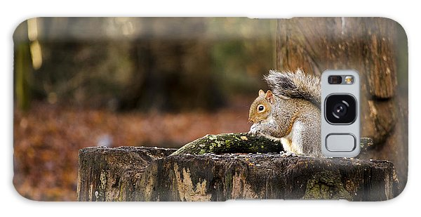 Grey Squirrel On A Stump Galaxy Case