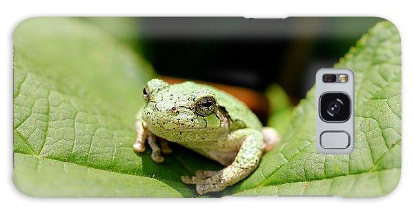Grey Tree Frog Galaxy Case