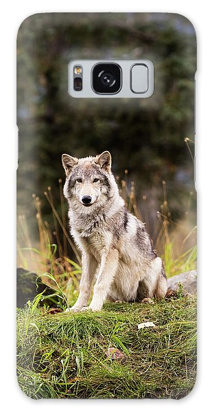 Grey Wolf  Canis Lupus  Pup Roams It S Galaxy Case