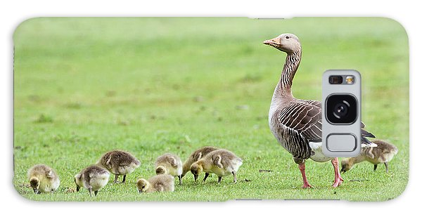 Gosling Galaxy Case - Greylag Goose And Goslings by John Devries/science Photo Library